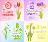 8 March Womens Day Posters Best Wish Greeting Card. 8 March womens day posters best wishes greeting cards set with tulips, snowdrops and yellow daffodil flowers Royalty Free Stock Photo