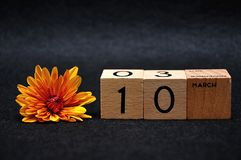 10 March on wooden blocks with an orange daisy. On a black background royalty free stock photo