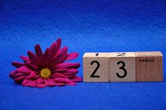 23 March on wooden blocks with a purple daisy. On a blue background stock photography