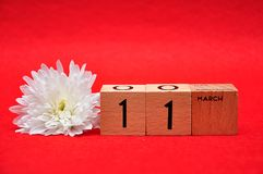 11 March on wooden blocks with a white daisy. On a red background stock image