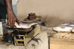 Marchand ambulant indien - poisson image stock