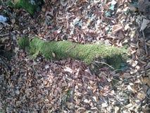 Marchant et recherchant des arbres Photographie stock libre de droits