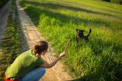 Marchant le chien photographie stock