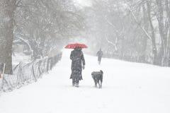 Marchant le chien photo libre de droits