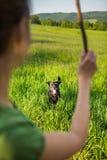 Marchant le chien photos stock
