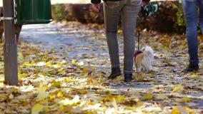 Marchant le chien sur Autumn Morning clips vidéos