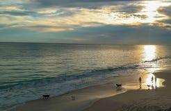 Marchant les chiens au coucher du soleil Image stock