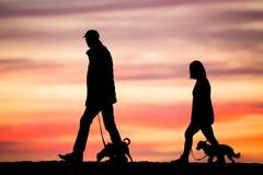 Marchant les chiens au coucher du soleil photo libre de droits