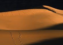 Marchant les dunes Images stock