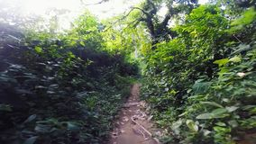 Marchant sur une traînée le long des palmiers et la jungle de forêt sur l'île de lapin, Kaoh Tonsay, Cambodge clips vidéos