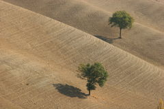 MARCHE. Landscape of the Italian region of Marche. Fields Stock Photos
