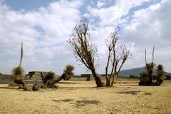 Marche autour de Teotihuacan Image libre de droits