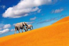 marche d'imagination d'éléphants de désert Photographie stock