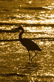 Marche dans l'eau de la silhouette de héron Photographie stock