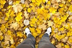 Marche dans la forêt d'automne Photographie stock