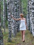 Marche dans la plantation de bouleau Image stock
