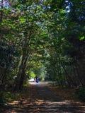 Marche dans les bois photo stock