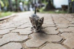 Marche de chat de bébé Images stock