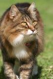 marche de chat de Tortiouse-interpréteur de commandes interactif Photo libre de droits