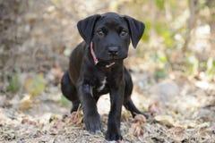 Marche de chien photos libres de droits