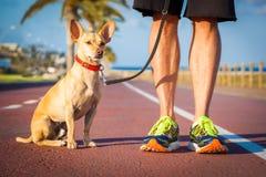 Marche de chien et de propriétaire Image stock