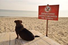Marche de chien interdite Image libre de droits
