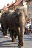 Marche de deux éléphants Images stock