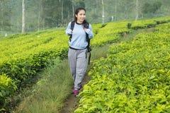 Marche de touristes femelle dans la plantation de thé images libres de droits