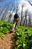 Marche en nature Image stock