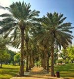 Marche en parc Image libre de droits