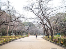 Marche en parc d'Ueno Photo stock