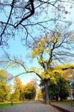 Marche en parc de place de cathédrale dans la ville de Vilnius Photographie stock