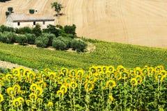 Marche (Italia): paesaggio di estate Immagine Stock Libera da Diritti
