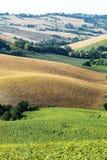 Marche (Italia): paesaggio di estate Fotografia Stock Libera da Diritti