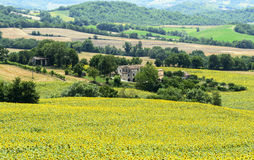 Marche (Italia): paesaggio di estate Fotografia Stock