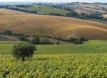 Marche (Italia): paesaggio di estate Fotografie Stock