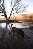 Marche métisse de Brown dans la boue sur la berge image libre de droits