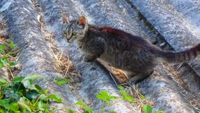 Marche mignonne de chat Photographie stock
