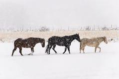 Marche pénible de chevaux par la neige Photographie stock libre de droits