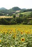 Marche: paesaggio del paese Fotografia Stock