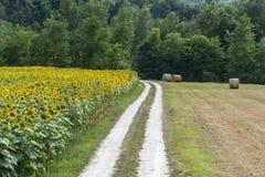 Marche: paesaggio del paese Fotografie Stock