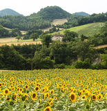 Marche: paesaggio del paese Immagini Stock