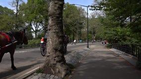 Marche par Central Park de New York Vidéo avec l'appareil-photo stabilisé clips vidéos