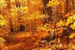 Marche par des arbres d'érable photographie stock libre de droits