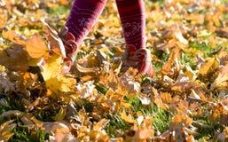Marche par des lames d'automne Photographie stock libre de droits