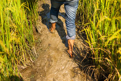 Marche par la boue Photographie stock