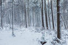Marche par la forêt d'hiver avec la neige pendant l'afte en retard Photo stock