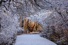 Marche par les bois Photo stock