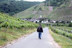 Marche par les vignes Photographie stock