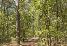 Marche parmi les arbres Image stock